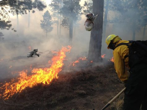 Species threatened after Australian wildfires